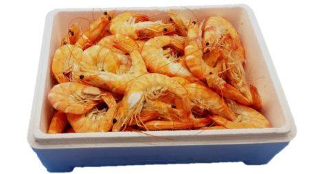 langostinos cocidos medianos 70 und 2 kg caja abierta